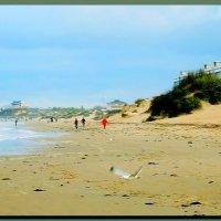 море. песчаный  пляж. весна  2016. :: Ivana