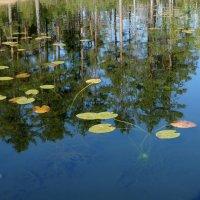 Карелия - страна озер :: Елена Якушина