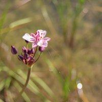 цветок 2 :: Katerina Sheglova