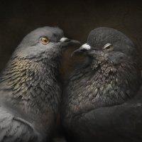 Любовь и голуби :: eliston м