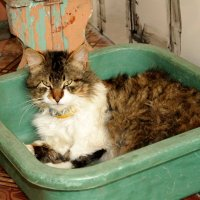 любимый кот :: анатолий грицаенко