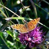 Майская бабочка :: Ольга Голубева
