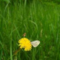 Бабочка :: Оксана Романова