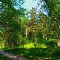 Тропа в лесу :: Nina Yudicheva