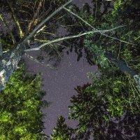 Ночь в лесу :: Дмитрий