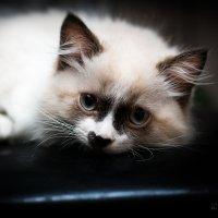Ах эти глаза............ :: Оксана Романова