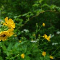 Лесные цветы :: Владислав Ходий