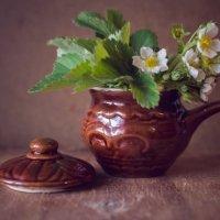 цветение :: Тася Тыжфотографиня