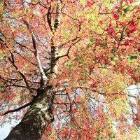 Чудеса природы :: Алёна Ястремская