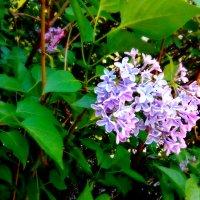 Запах весны :: Вероника Озем