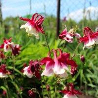 Цветы :: Фото Яника