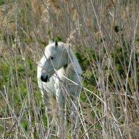 лошадь :: Alla Swan