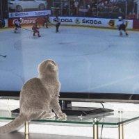 Хоккей Россия - США :: юрий Амосов