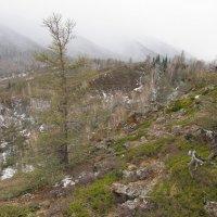 Весенний туман в отрогах Тигирекского хребта Алтай :: Андрей
