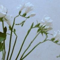 Цветы :: Елена Бразис