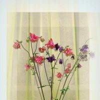 Цветы :: Геннадий Храмцов