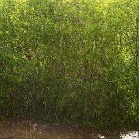 Грибной дождь :: Евгений Агудов