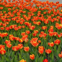 Краски весны :: Константин Жирнов