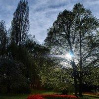 Река цветов :: Денис Сухинин