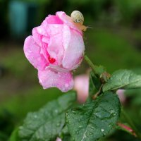 Майский дождь :: оксана косатенко