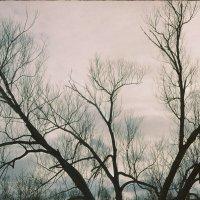 Дерево :: Ольга Жижманова