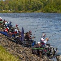 Каждой рыбке по рыбаку :: Елена Пономарева