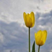 Кто не вырастил тюльпан - тот апрель просачковал .... :: Va-Dim ...