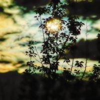Майская ночь. :: Казимир Буйвис
