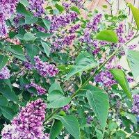 Цветущая весна :: Lady Etoile