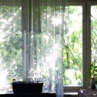 Солнечные блики :: Николай Холопов
