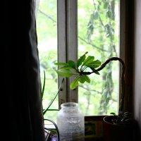 Цветок на окне :: Николай Холопов