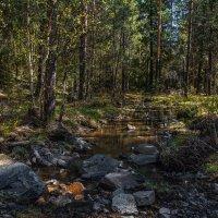 Майский лес :: vladimir