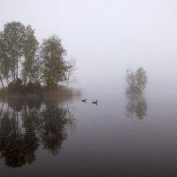 утро на Вэллен :: liudmila drake