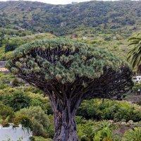 Интересное дерево :: Witalij Loewin