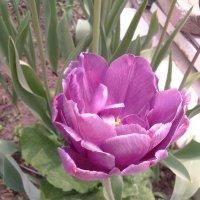 Цветы-наша радость ! :: Татьяна ❧