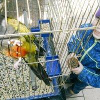 Попугай в клетке :: Никола Н