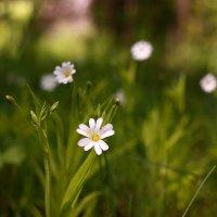 Цветы :: Вячеслав Ложкин