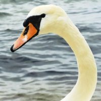 Лебеди на пляже. А я красивая. :: Маргарита Батырева
