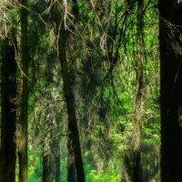 Лесной уголок :: Владимир Морозов