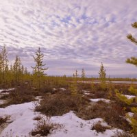 Весна на Ямале.22 мая. :: Лариса Красноперова
