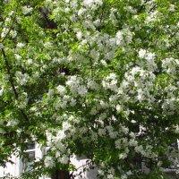 Весна :: Валерий A.