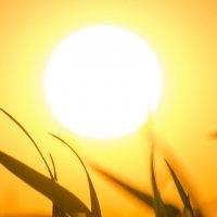 в жёлтом свете заката,уходил светлый день... :: Алексей -