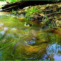 Краски лесного ручья :: Андрей Заломленков