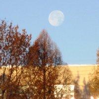 Луна на небе голубом :: Дмитрий Никитин