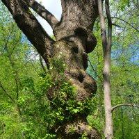 два таких разных дерева... :: megaden774