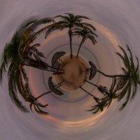 Пальмы и грибки :: Lukum