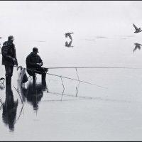Водоплавающие :: Евгений Турков