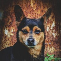 Собака-улыбака... :: Арина