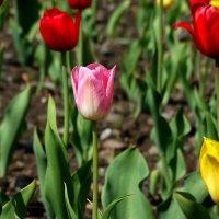 весенние краски :: Alla Swan