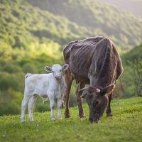 мама и я.... :: Евгений Khripp